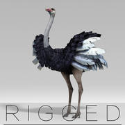 Ostrich  rigged 3d model