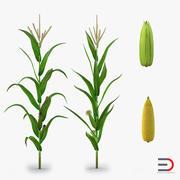 Coleção Corn 3d model