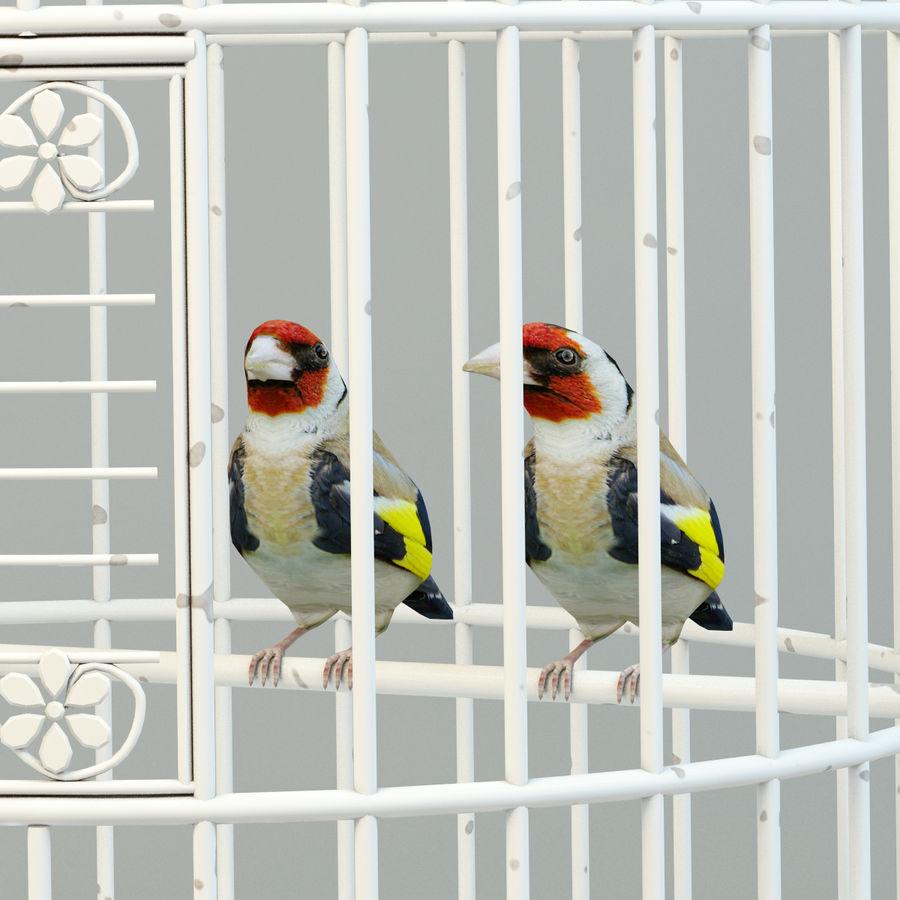 Клетка с птицами royalty-free 3d model - Preview no. 3