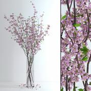桜の花 3d model
