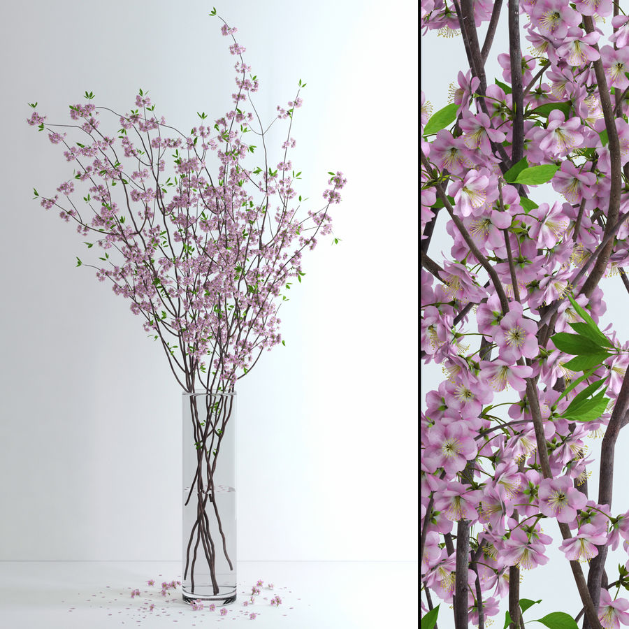 Cherry Blossom royalty-free 3d model - Preview no. 1