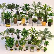 Pflanzen 3d model