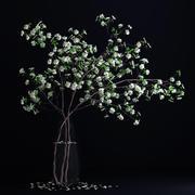 Dogwood White Blossom 3d model