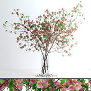 Dogwood Pink Blossom 3d model