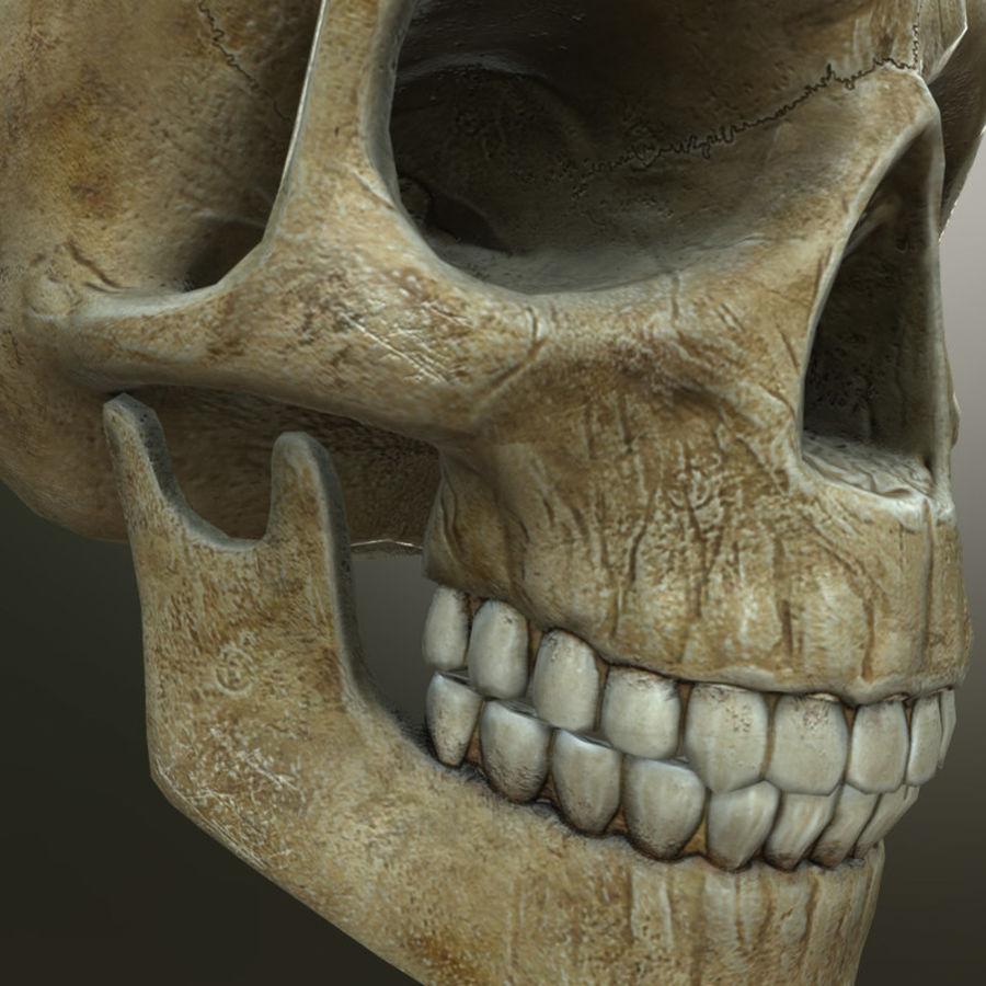 Человеческий череп royalty-free 3d model - Preview no. 10