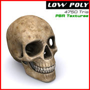 Crânio humano 3d model