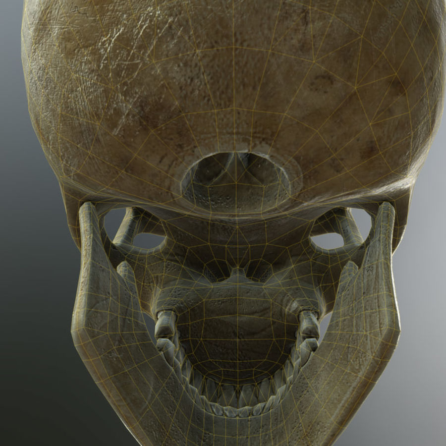 Человеческий череп royalty-free 3d model - Preview no. 13