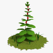 Plantar 3d model
