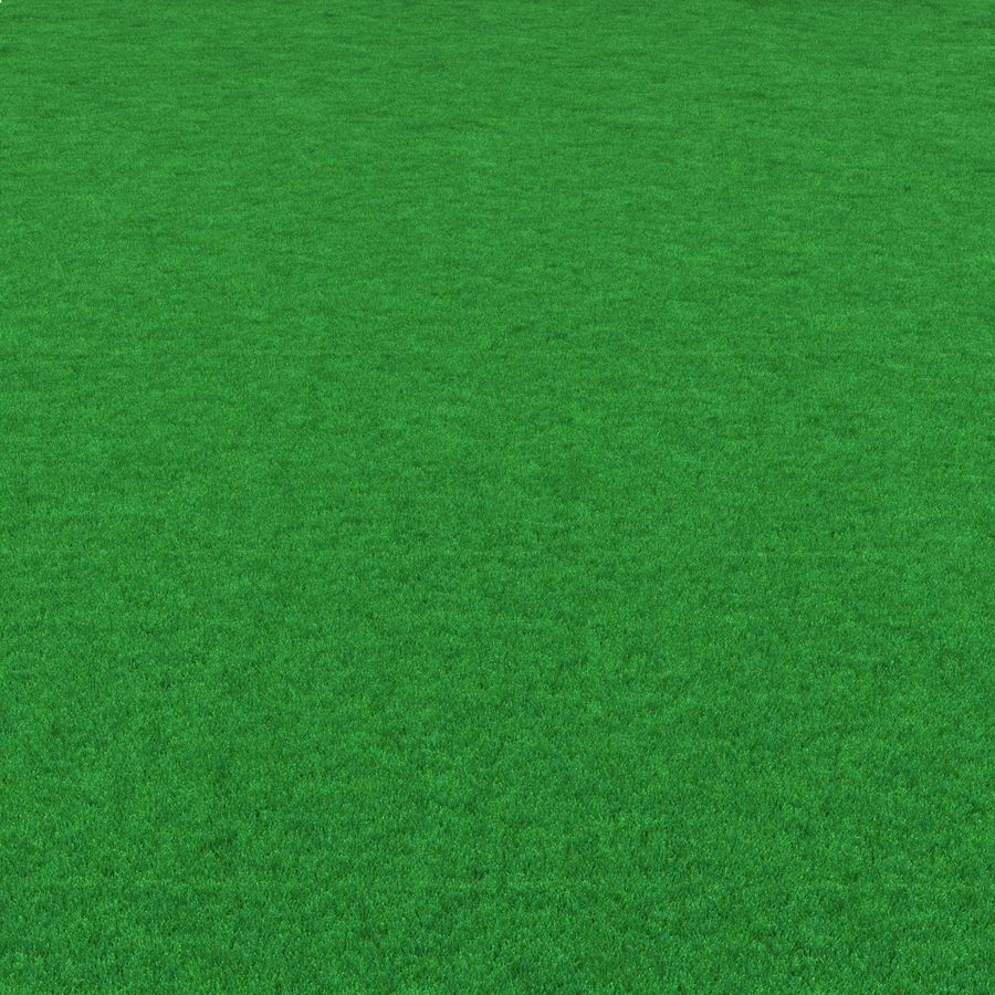 Kentucky Bluegrass Grass royalty-free 3d model - Preview no. 5