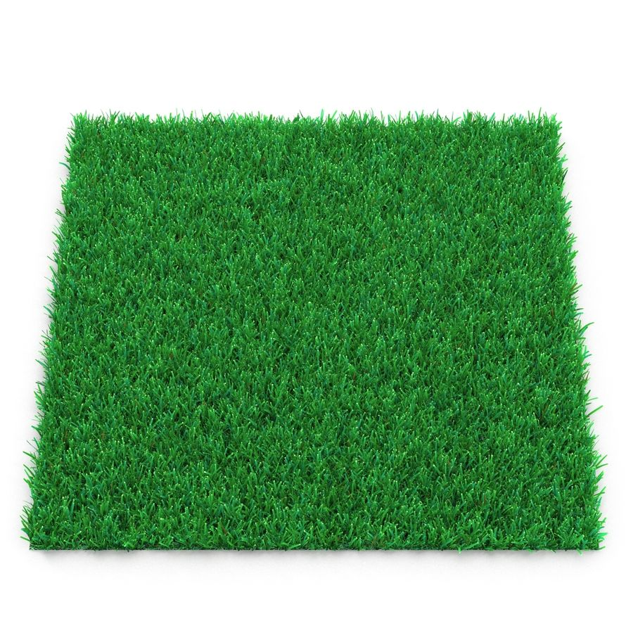 Kentucky Bluegrass Grass royalty-free 3d model - Preview no. 3