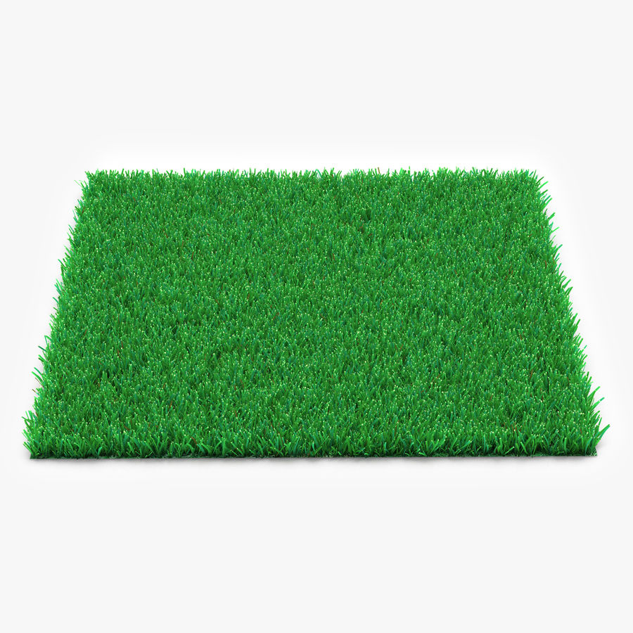 Kentucky Bluegrass Grass royalty-free 3d model - Preview no. 1