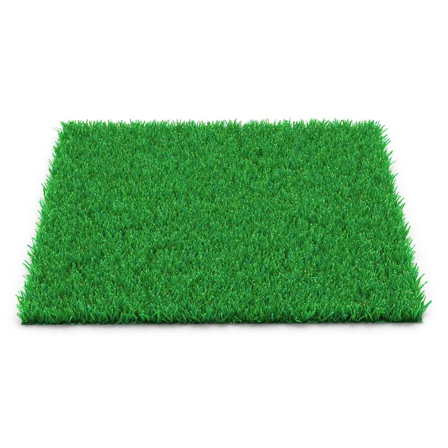 Kentucky Bluegrass Grass royalty-free 3d model - Preview no. 2