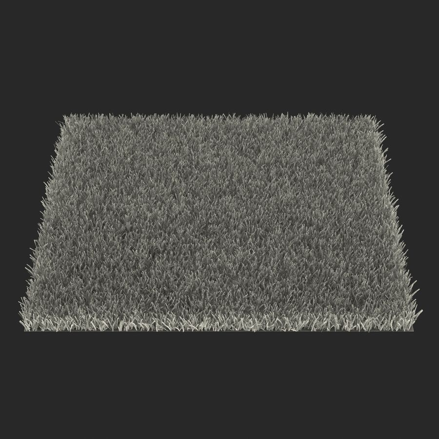 Kentucky Bluegrass Grass royalty-free 3d model - Preview no. 19