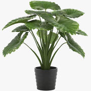 Taro Plant 3d model