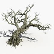 Suche drzewo 15 3d model
