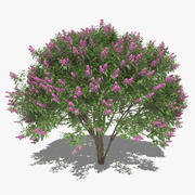 Common Lilac Set 3d model