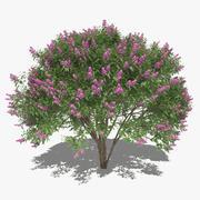 Vanliga Lilac Set 3d model