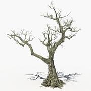 Suche drzewo 14 3d model