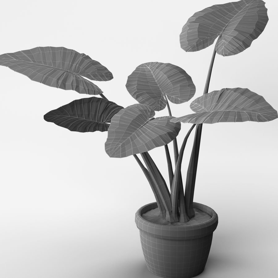 Alocasia Plant royalty-free 3d model - Preview no. 8