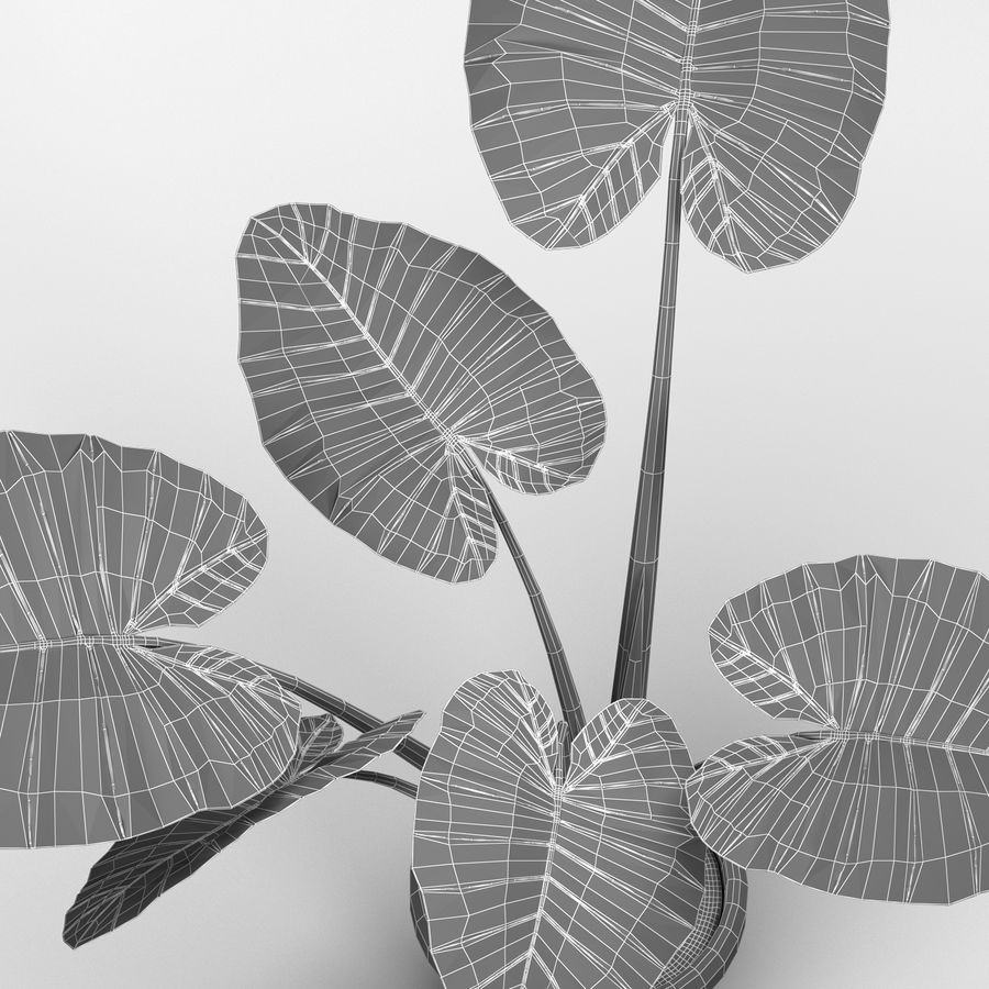 Alocasia Plant royalty-free 3d model - Preview no. 6