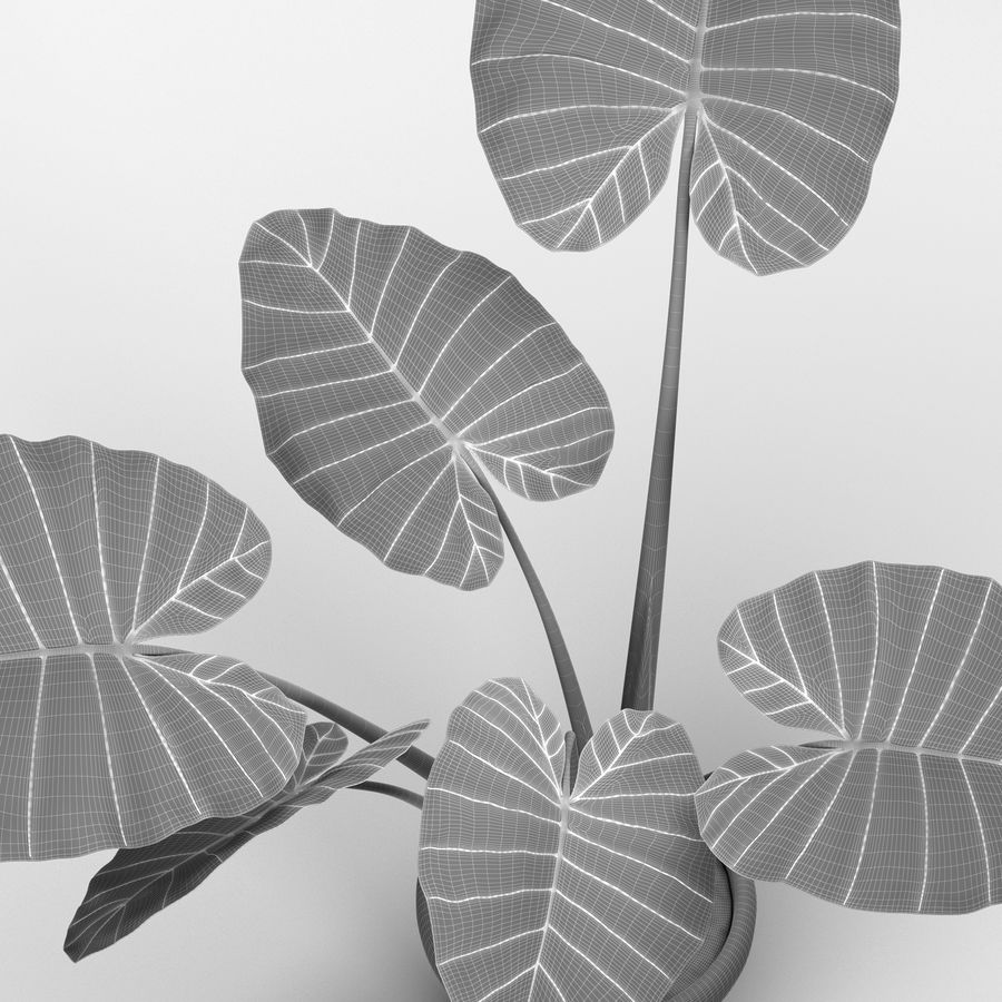 Alocasia Plant royalty-free 3d model - Preview no. 7
