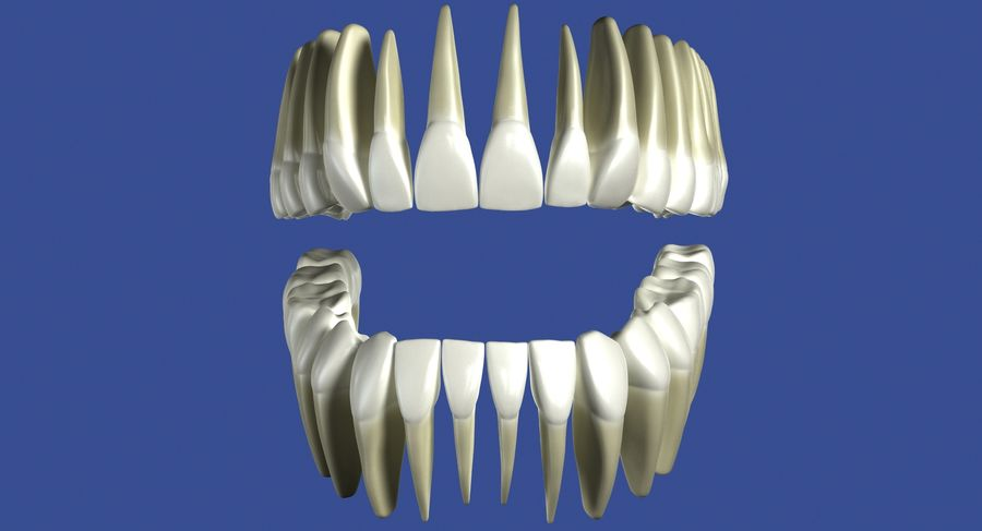Model 3d ludzkich zębów royalty-free 3d model - Preview no. 6
