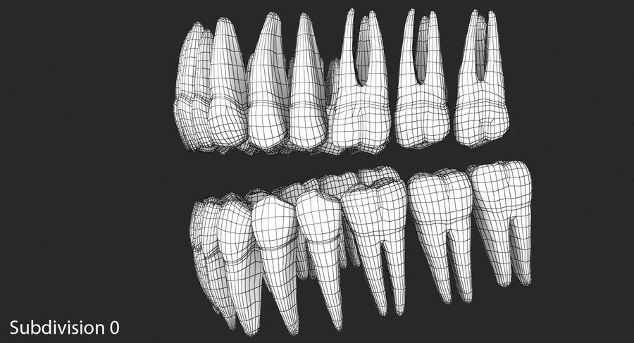 Model 3d ludzkich zębów royalty-free 3d model - Preview no. 11