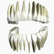 Modello 3d denti umani 3d model