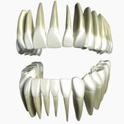 Model 3d ludzkich zębów 3d model