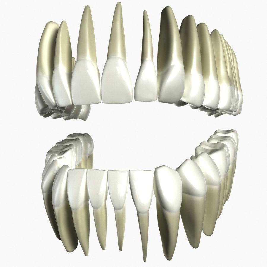 Model 3d ludzkich zębów royalty-free 3d model - Preview no. 1