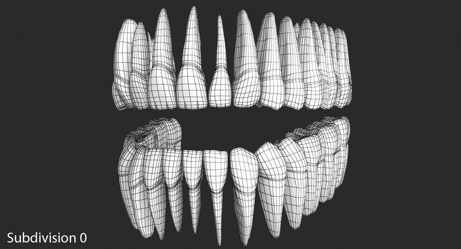 Model 3d ludzkich zębów royalty-free 3d model - Preview no. 9