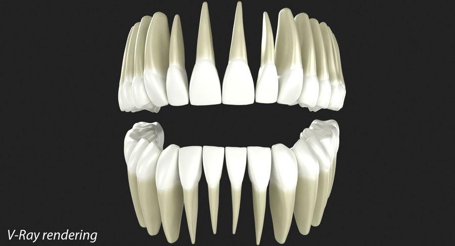 Model 3d ludzkich zębów royalty-free 3d model - Preview no. 3