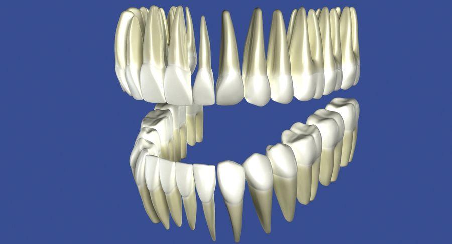 Model 3d ludzkich zębów royalty-free 3d model - Preview no. 7