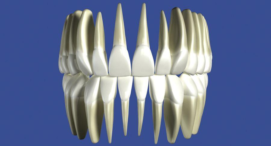Model 3d ludzkich zębów royalty-free 3d model - Preview no. 4