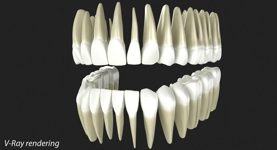 Model 3d ludzkich zębów royalty-free 3d model - Preview no. 2
