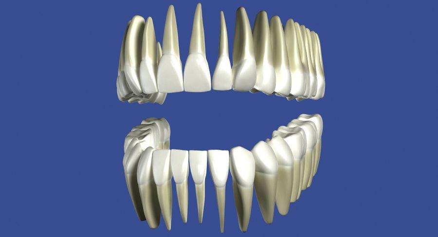Model 3d ludzkich zębów royalty-free 3d model - Preview no. 5