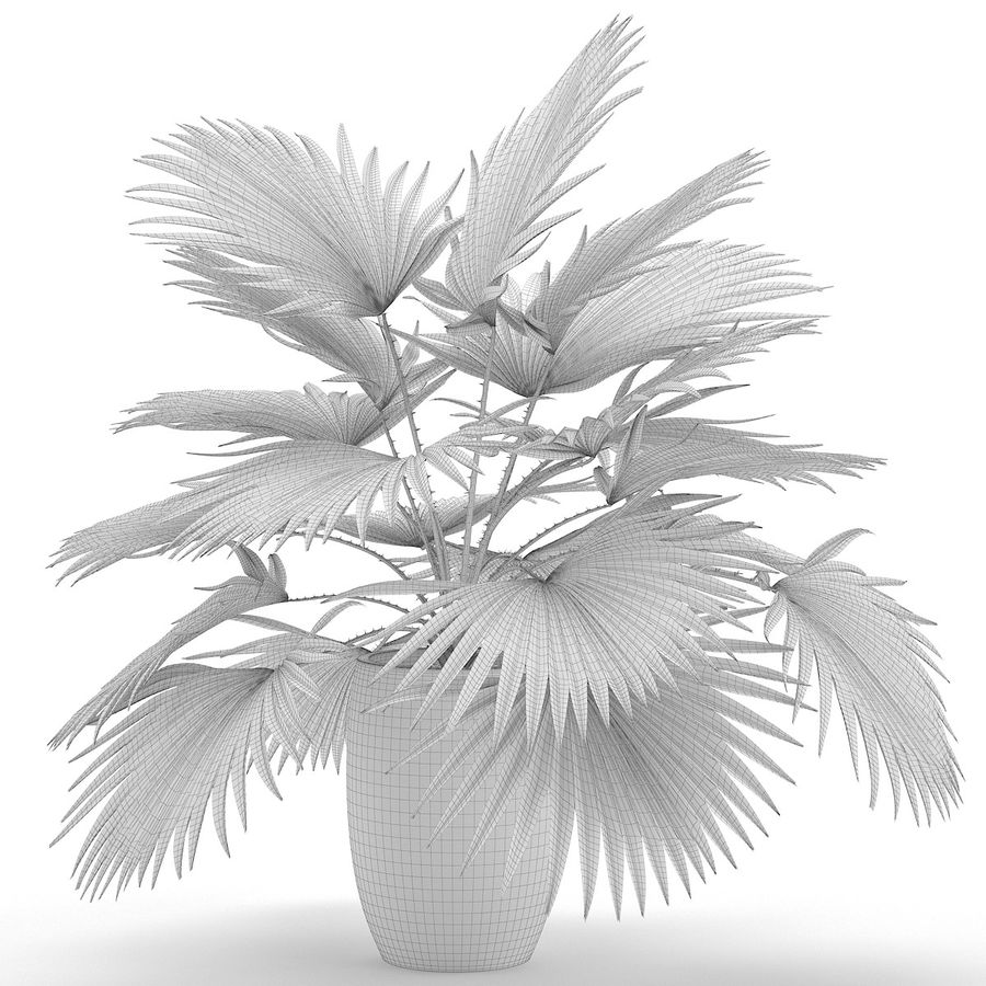 Palm royalty-free 3d model - Preview no. 11
