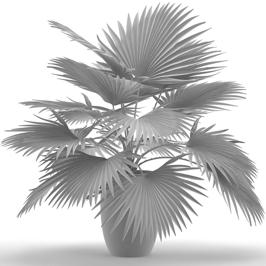 Palm royalty-free 3d model - Preview no. 13