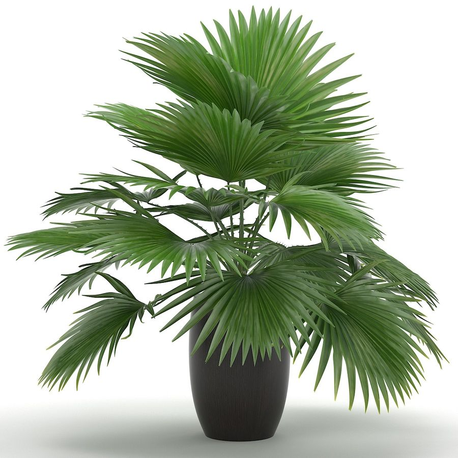 Palm royalty-free 3d model - Preview no. 6