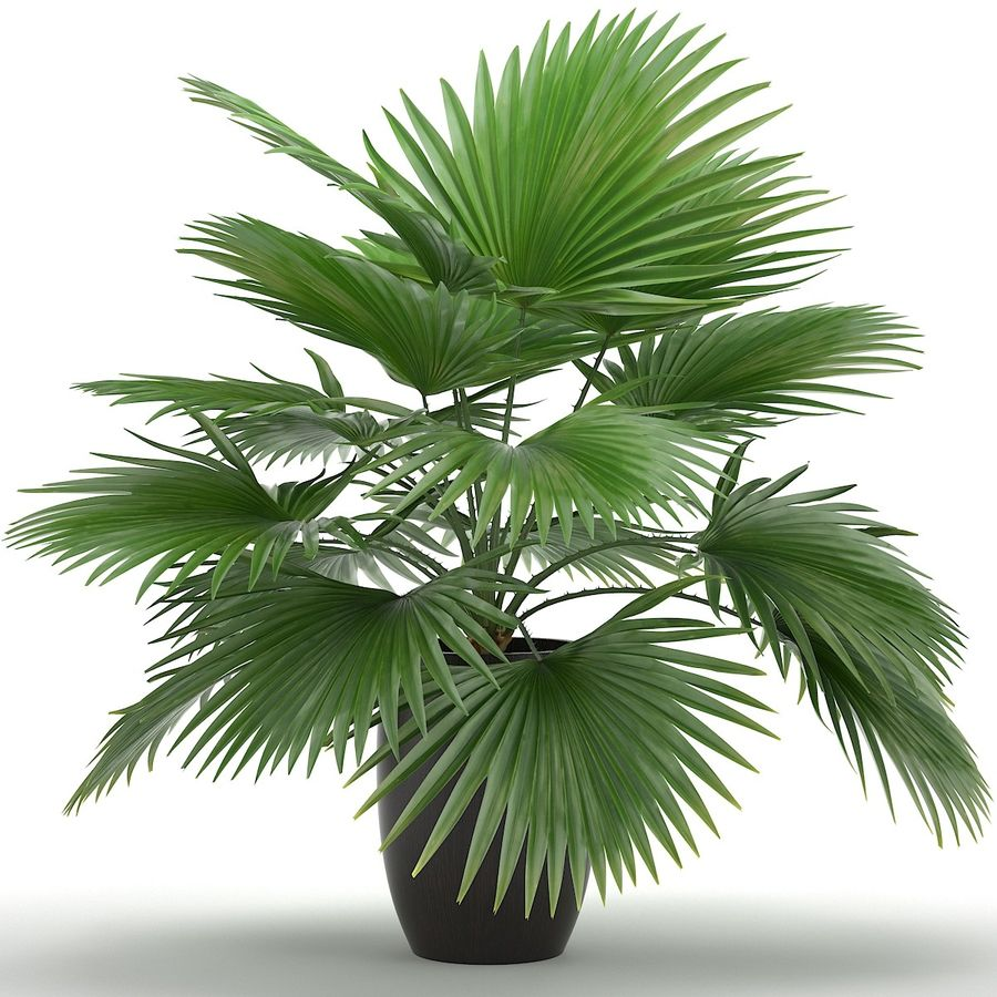 Palm royalty-free 3d model - Preview no. 2