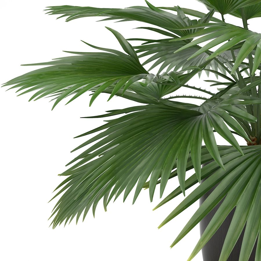 Palm royalty-free 3d model - Preview no. 4