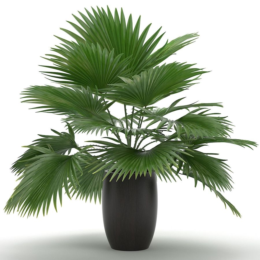 Palm royalty-free 3d model - Preview no. 5