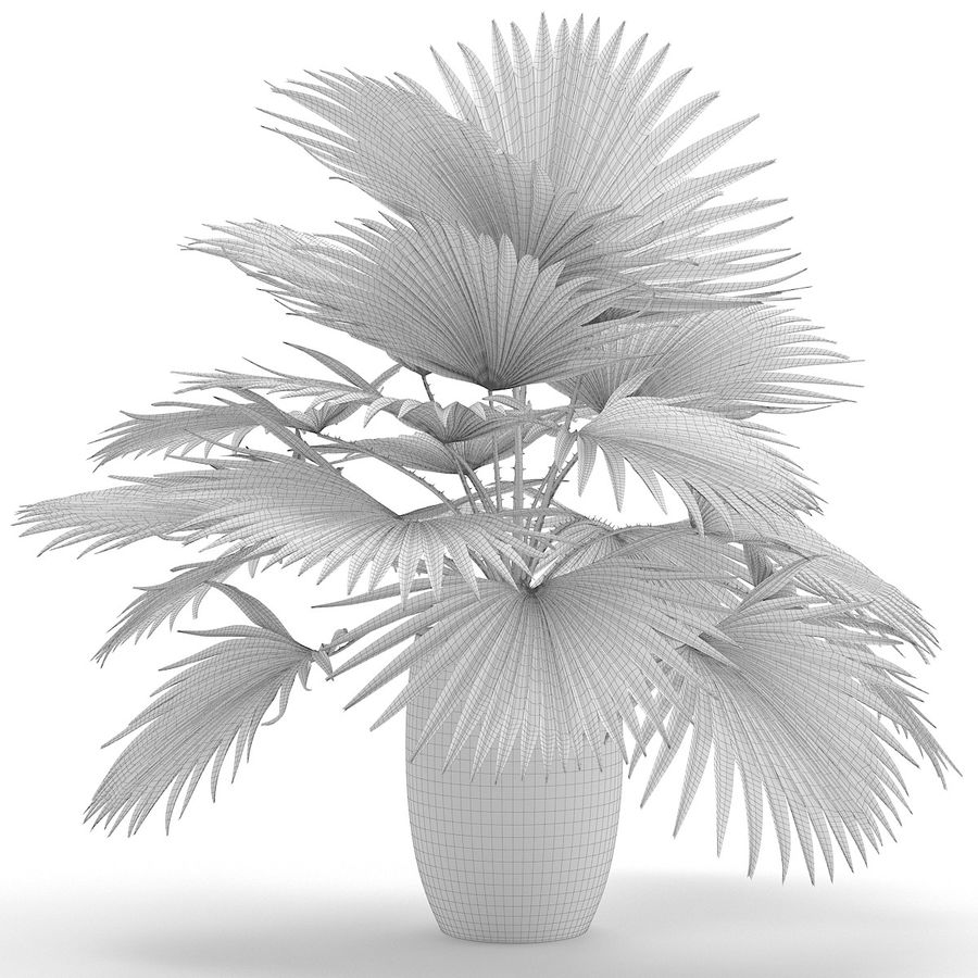 Palm royalty-free 3d model - Preview no. 12