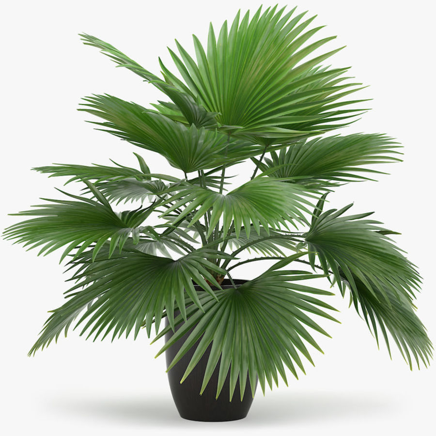 Palm royalty-free 3d model - Preview no. 1
