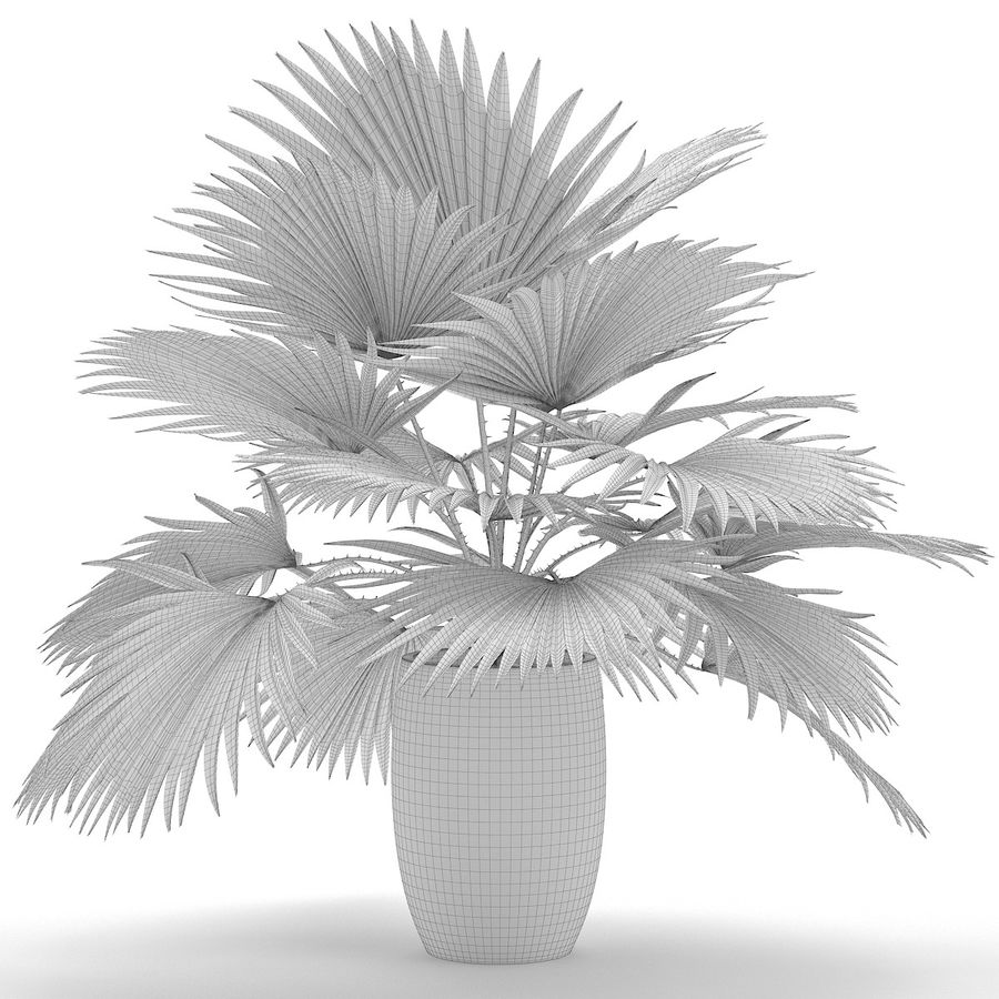 Palm royalty-free 3d model - Preview no. 10