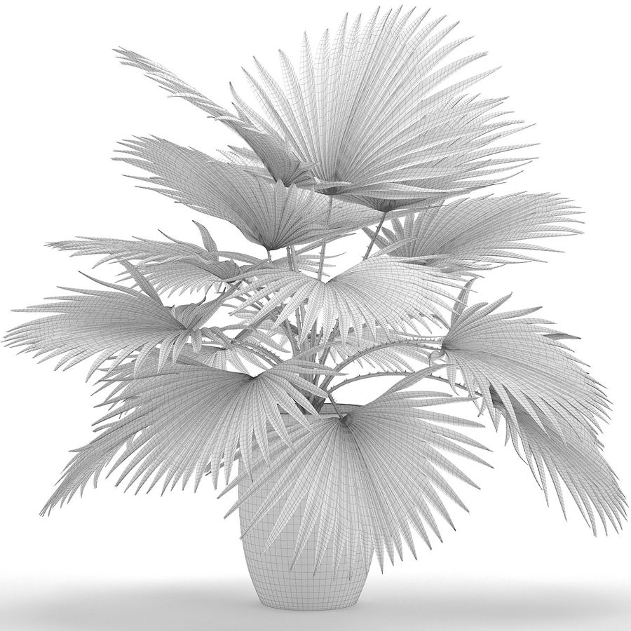 Palm royalty-free 3d model - Preview no. 14