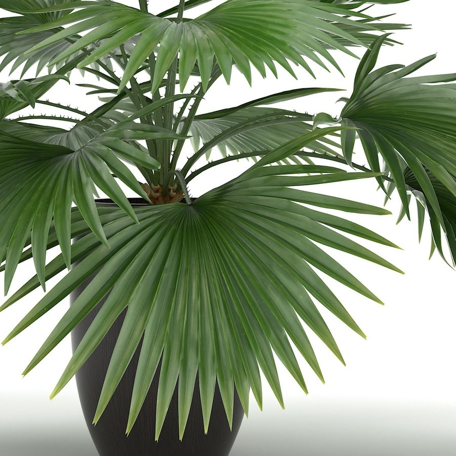 Palm royalty-free 3d model - Preview no. 3