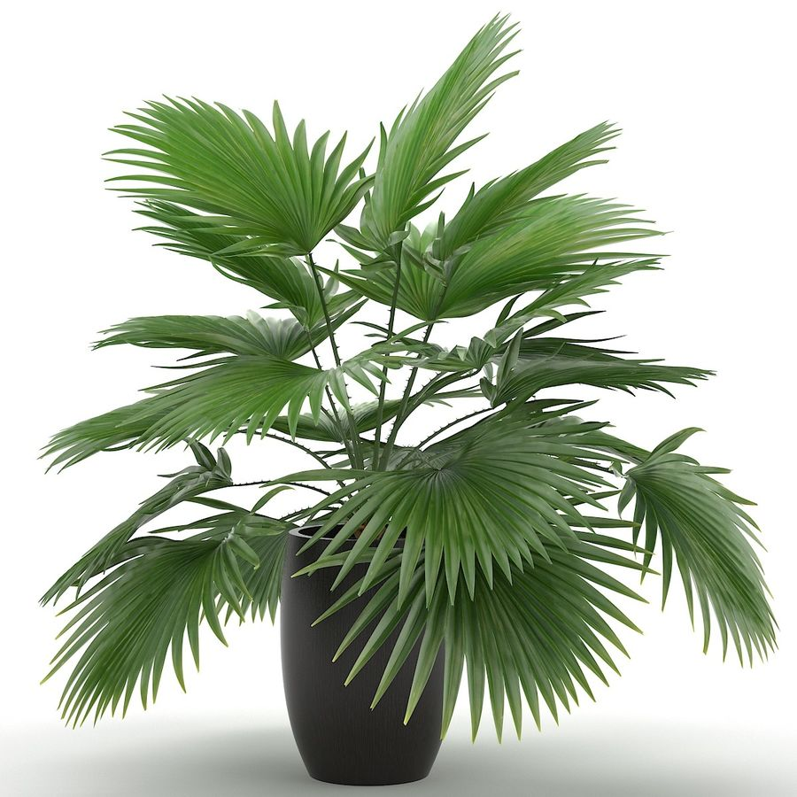 Palm royalty-free 3d model - Preview no. 7