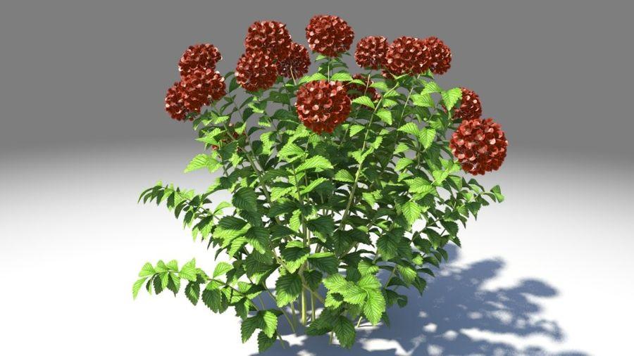 Красный цветок royalty-free 3d model - Preview no. 2