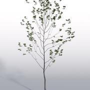 Freilandpflanze 3 3d model
